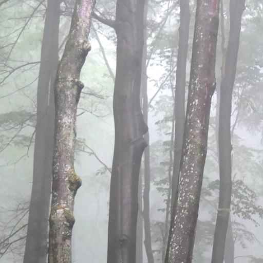 App Insights Creepy Forest Wallpaper