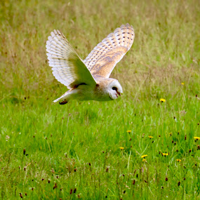 by Richard Lawes - Novices Only Wildlife
