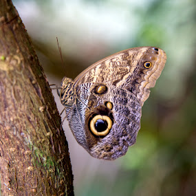 butterfly by Sarah Tregear - Animals Insects & Spiders ( butterfly, macro, tree, butterflies, pretty butterfly,  )