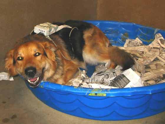Monitor uterino usado en una perra en estado I de labor