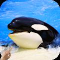 Orca Killer Whale APK