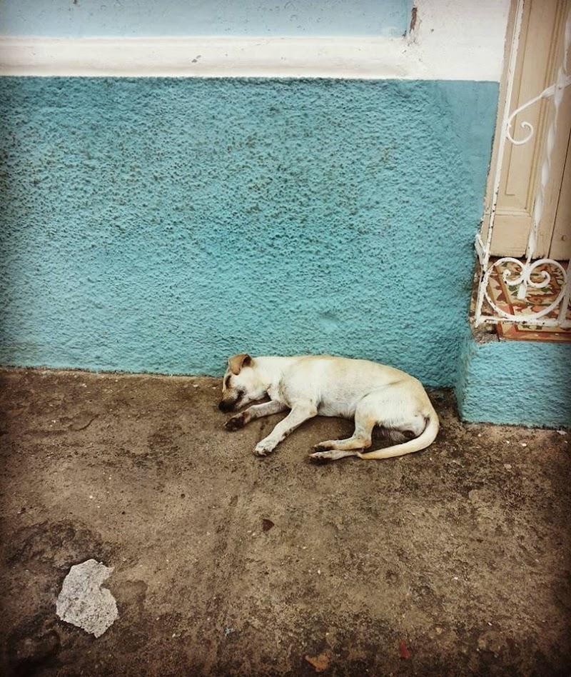 Sonnellino cubano... di Francesca Malavasi