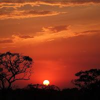 Africa!!! di