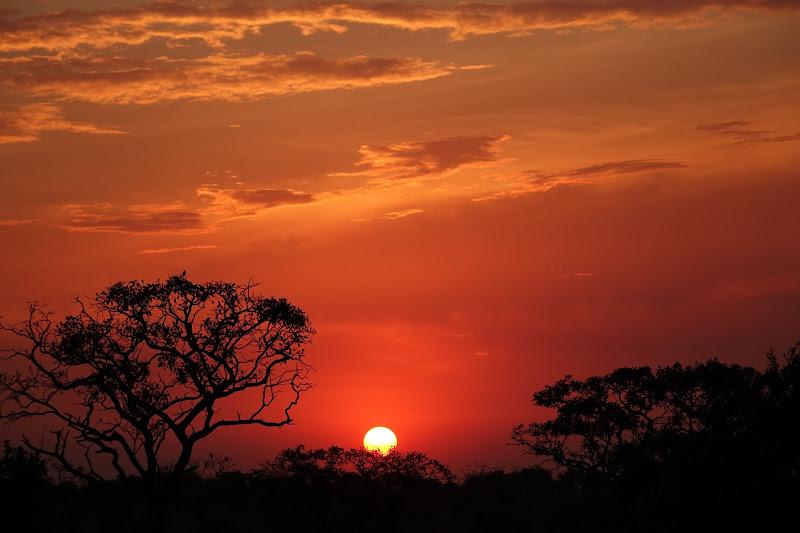 Africa!!! di Alessandro Pezzo