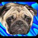 Pug Ball icon