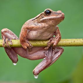 when it rains... by Lessy Sebastian - Animals Amphibians