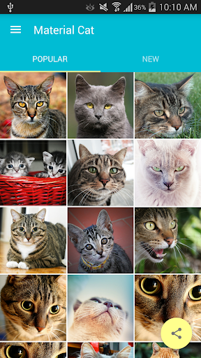 Material Cat