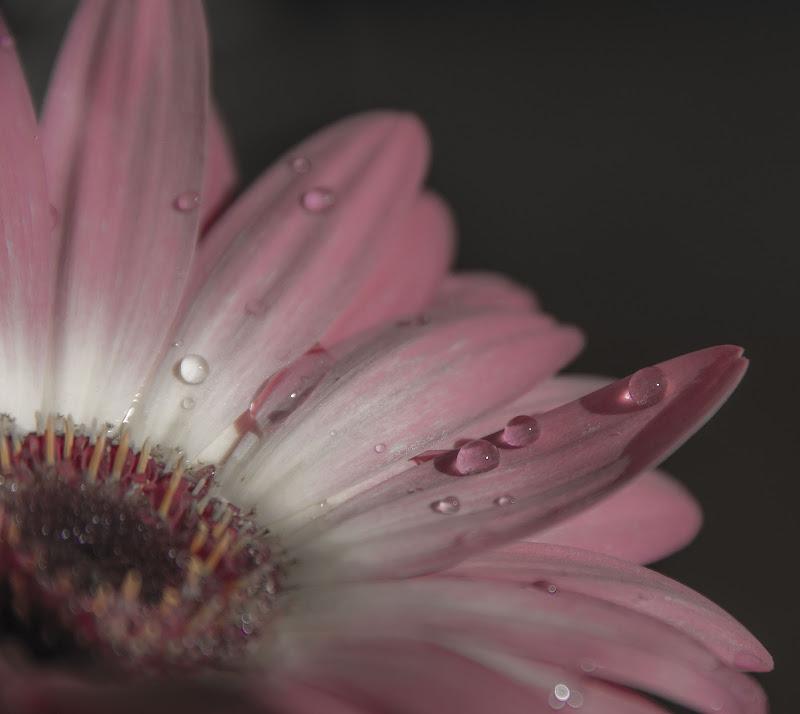 Pinky drops di pieralisa