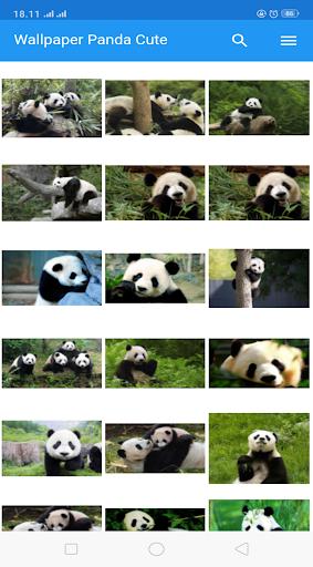 Wallpaper Panda HD screenshot 3