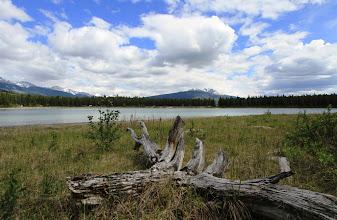 Photo: Jasper - Patricia Lake