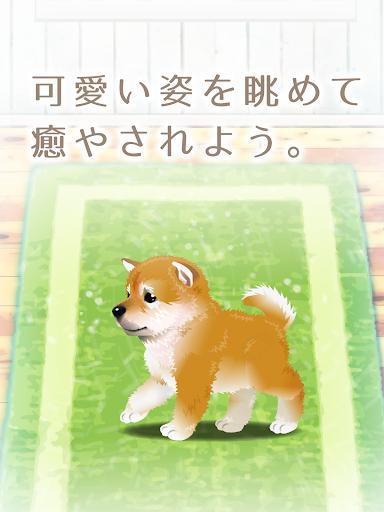 玩冒險App|癒しの子犬育成ゲーム〜柴犬編〜免費|APP試玩