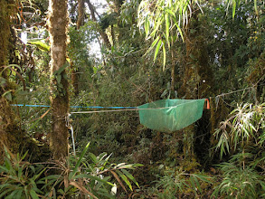 Photo: A seed trap - leaves, fruits, flowers, and whatever other debris from the canopy falls into the trap and is collected on a monthly basis