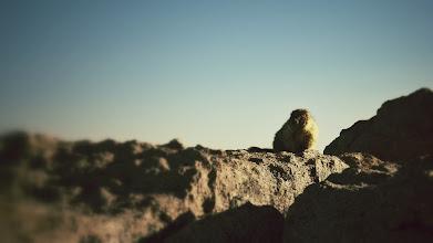 Photo: Marmots take breaks.
