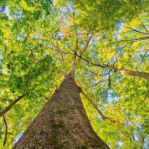 top of trees 23.jpg