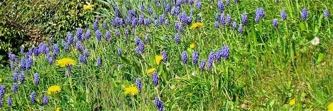 Photo: Les belles fleurs de printemps sont partout, malgré la température estivale (25°C)