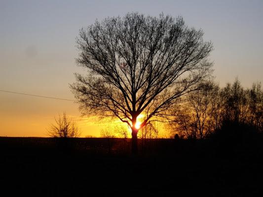 Il sole e l'albero di bluebird