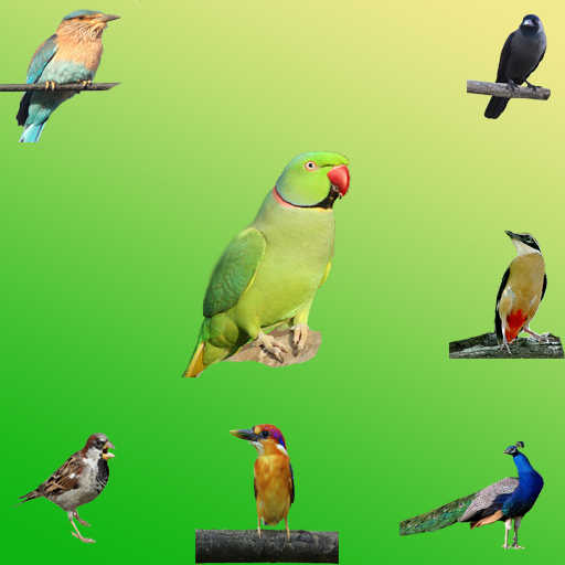 Birds Sound for Baby Learning- screenshot