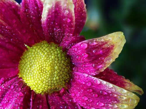by Sam Song - Flowers Flower Gardens