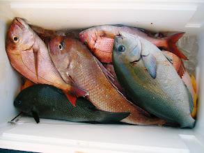 Photo: こちらは、ワタナベさんのクーラーです!真鯛、オナガ、口太・・・