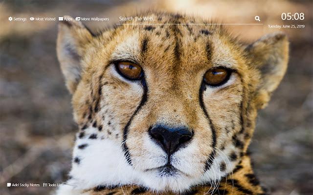 Cheetah Wallpaper HD New Tab Theme