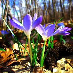 by Vukosava Radenovic - Flowers Flowers in the Wild (  )
