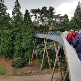 Canopy Walk by Ingrid Anderson-Riley - Instagram & Mobile Android