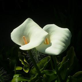 White Night by Jennifer Watkins Odom - Nature Up Close Flowers - 2011-2013