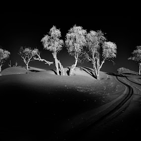 The Snake Trees by Souhayl Bk - Landscapes Deserts ( tree; desert; uae )