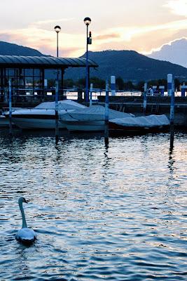 Il lago dei cigni di Ilaz