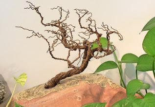 Photo: A copper bonsai