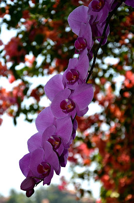 Orchidea di Bali di Julia Leonte