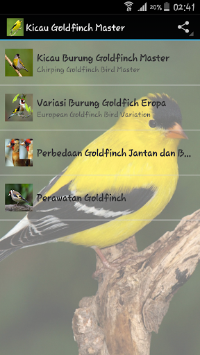 Goldfinch chirping Master