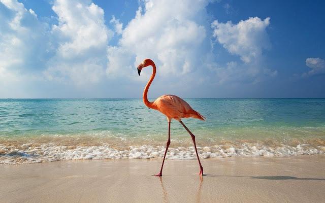 Flamingo Tab