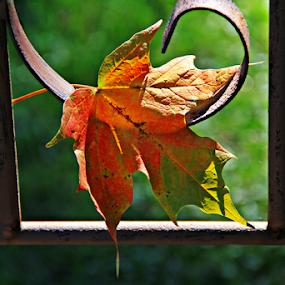 Autumn is near by Marsha Biller - Nature Up Close Leaves & Grasses ( hanging, railing, solo, metal, autumn colors, leaf,  )