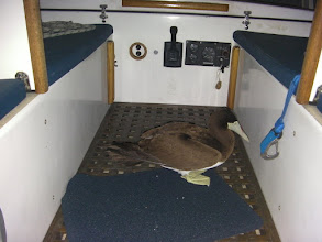 Photo: Booby aboard. Note bloodstained beak