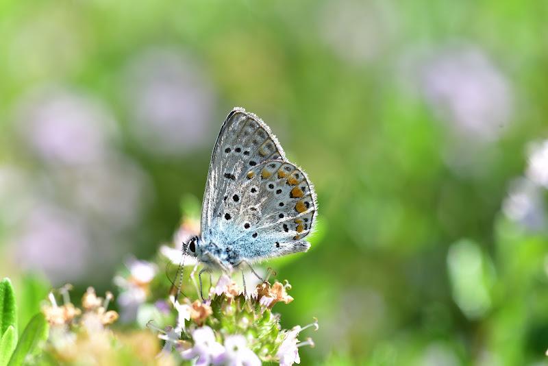 Il riposo della farfalla di Ilaria Bertini