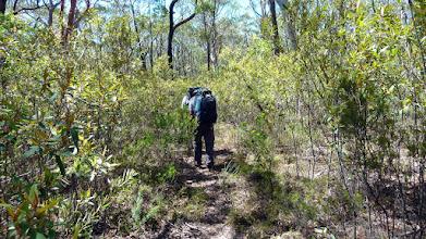 Photo: Walking through new NPWS link track
