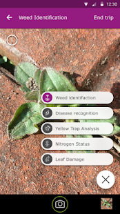 Scouting - Automate field diagnosis - náhled