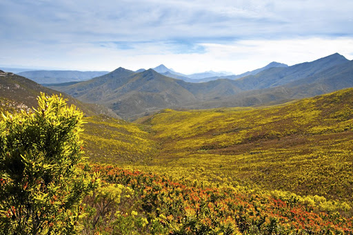 Threatened regions:  SA has 21,000, or about 5%, of the 400,000 known plant species in the world and the Cape biome is recognised as one of the six floral kingdoms. Scientists find about 60 to 70 new species a year in the country and the biodiversity is highlighted as a major scientific and economic advantage area.    Picture: ISTOCK