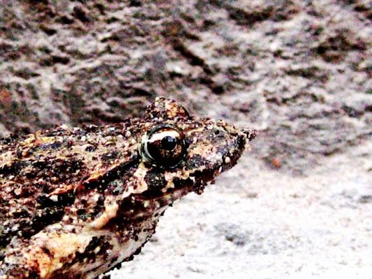 Ipnoticfrog di mosquita79