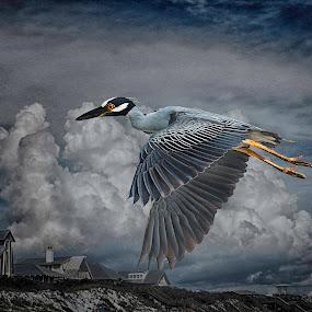 Blue Heron by William Underwood  - Digital Art Animals