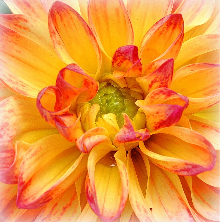 by Mike Roth - Flowers Single Flower (  )