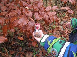Photo: zanimljiva igračka, mijenja boje kao kameleon ...