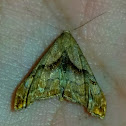 Dark spotted palthis moth