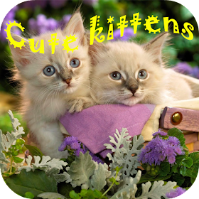 Cute kittens puzzles
