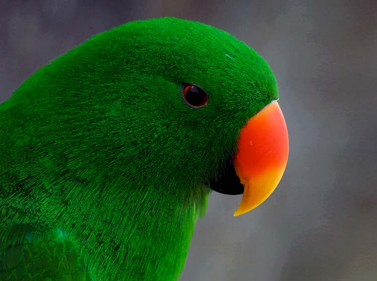 A green parrot at the Cairns ZOOM and Wildlife Dome.