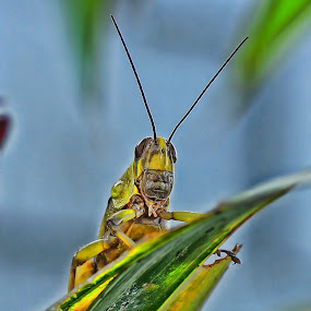 by Hendrianto YAP 叶 长 財 - Novices Only Macro
