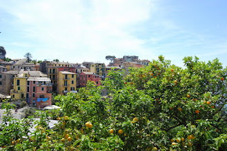 Photo: Lemon and Orange trees everywhere