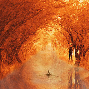 duck swimming down the walk by John Kolenberg - Digital Art Places ( duck, trees, down, walk, swimming, tunnel,  )