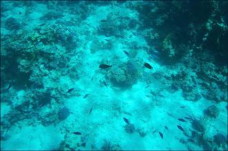 Photo: Seascope. Смотрим кораллы и рыбок. Лучше смотреть видеоhttp://luchecon.livejournal.com/566576.html или прямоhttps://www.youtube.com/watch?v=KIleZ1W1H2M
